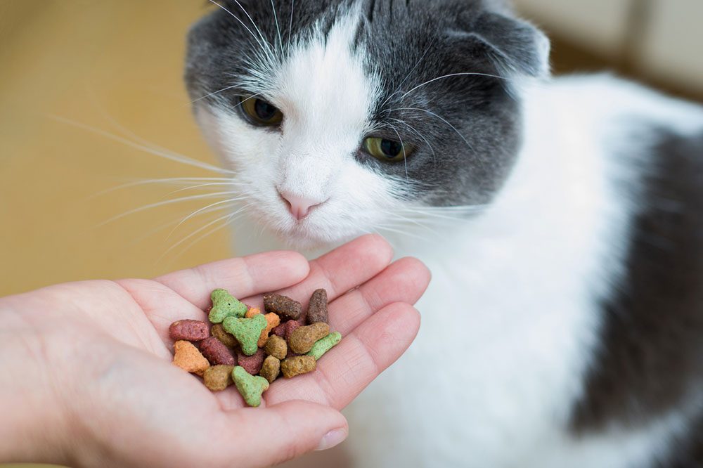5 Store-bought Healthy Cat Treat Brands for Felines